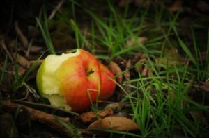 forbidden_fruit_small_500px
